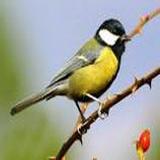 Районная экологическая акция «Покормим птиц зимой!»