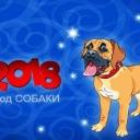 dog2018